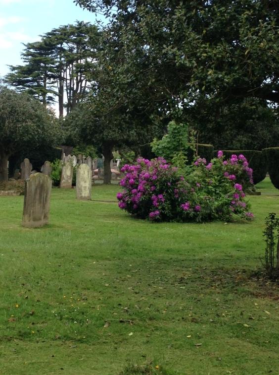 azalea bush cemetery